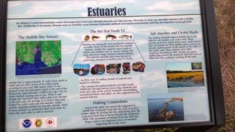 Estuarium Boardwalk