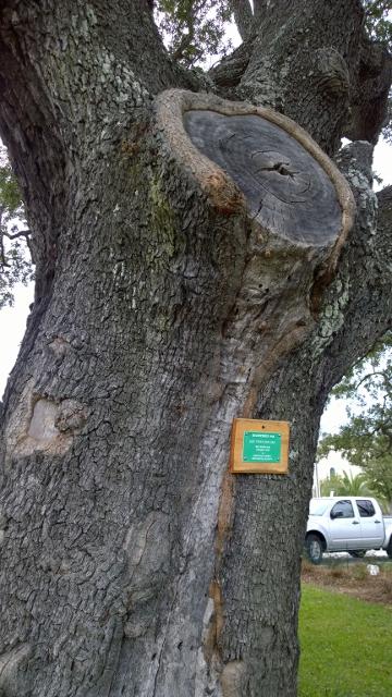 Registered Oak