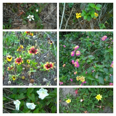 Flower collage from Nature Trail
