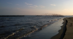 Terns take off