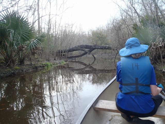 Tricky paddling under the tree over the canoe trail