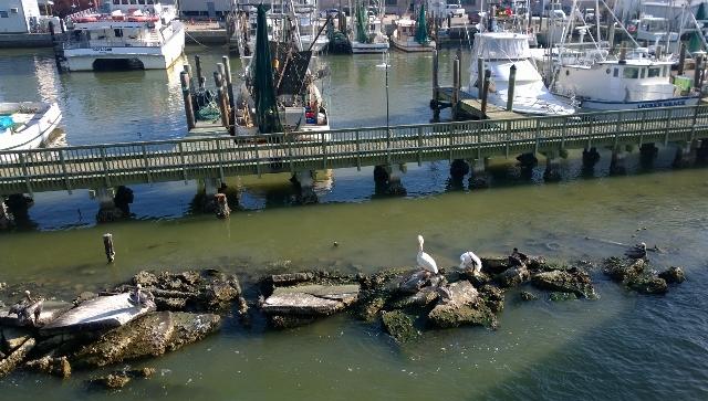 White Pelicans, Shrimp Boats