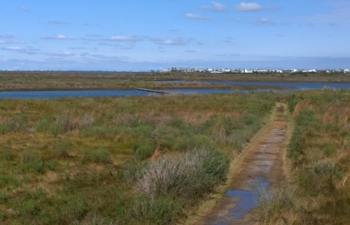 Galveston Island SP trails