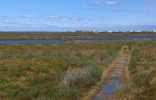 Galveston Island SP trails
