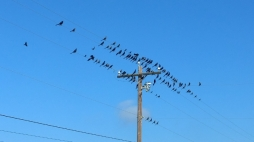 Crackle Birds