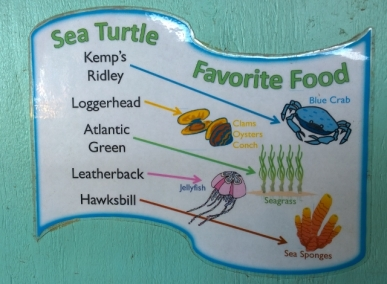 What Sea Turtles eat