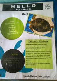 Each rescued turtle has a story
