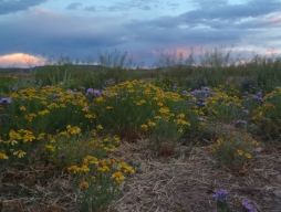 Balmorhea campsite flowers