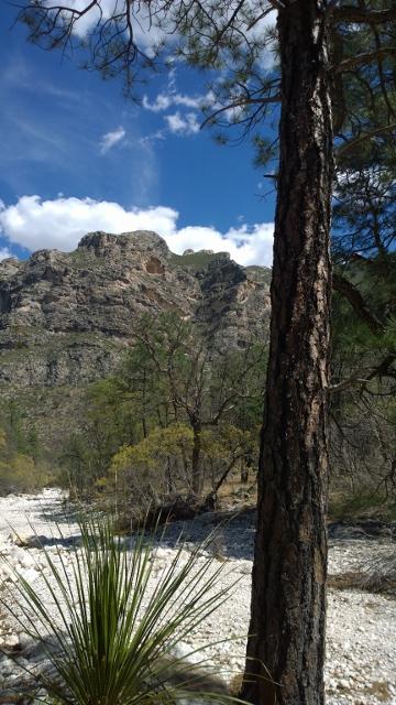 McKittrick Canyon Trail