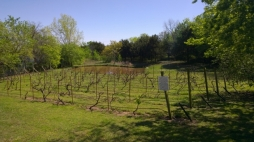 StableRidge Vineyards - Stroud