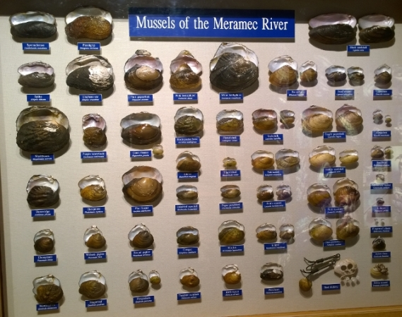 Mussel types