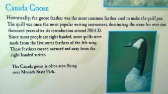 Fun Bird Facts