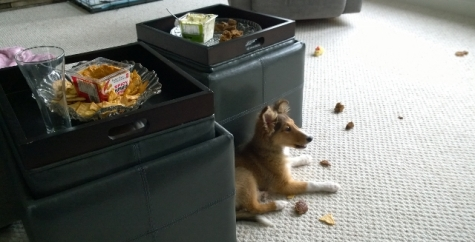 Don't leave the appetizers out with the puppy