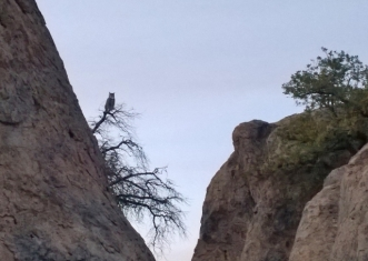 City of Rocks - Owl