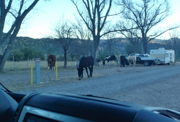 Horses grazing in Gila Hot Springs Ranch RV Park