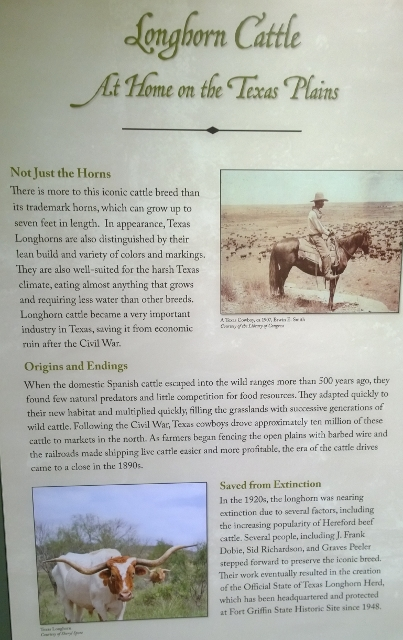 Fort Griffin - Official Longhorn Herd