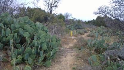 Cactus Cut Trail