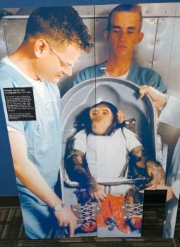 HAM - Chimpanzee
