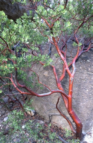 The bark was really this red