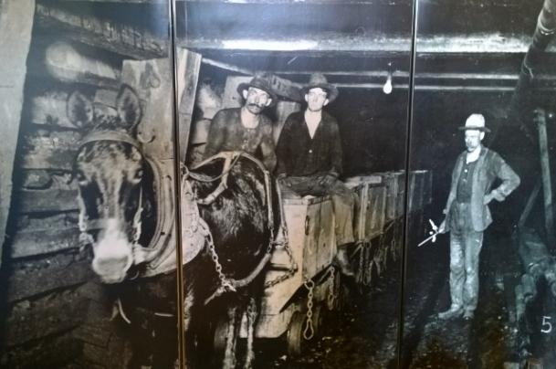 Mule hauling ore