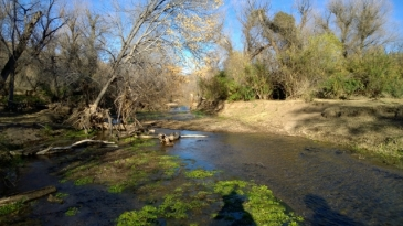 Sonoita Creek Trail