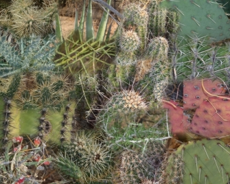Prickly collage