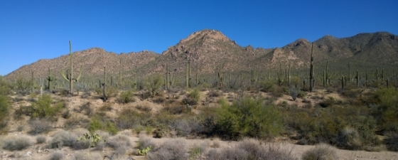 Saguaro NP West