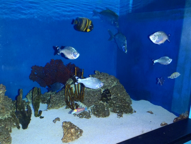 Sea of Cortez Aquarium