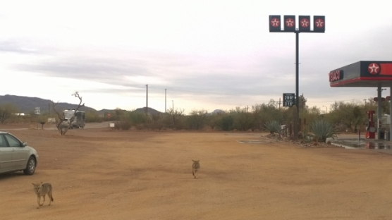 Texaco Coyotes