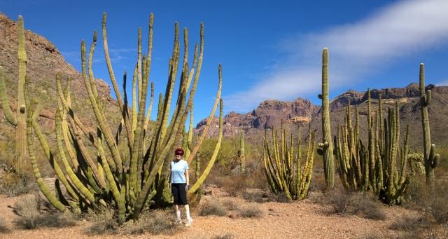 Sharon with Organ Pipe Cacti and Saguaros