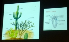 All Cacti have Spine clusters