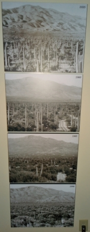 Saguaro numbers from 1935 to 1998