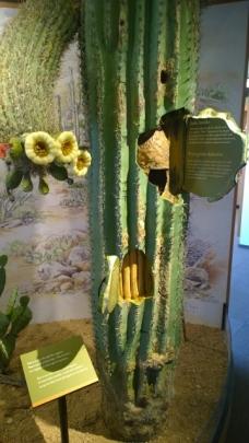 Saguaro structure