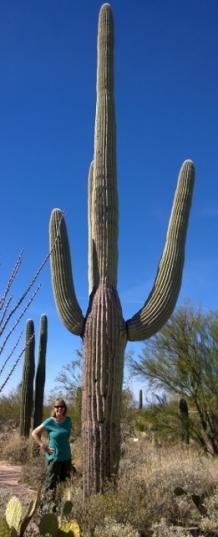 102 Year old Saguaro