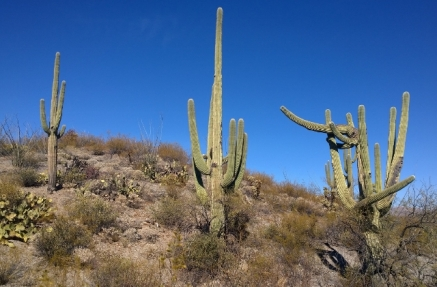 Along the Cactus Forest Trail