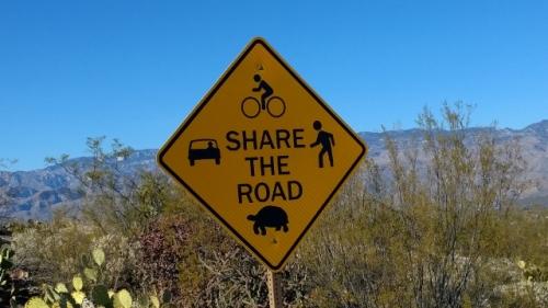 Share road with Desert Tortoise