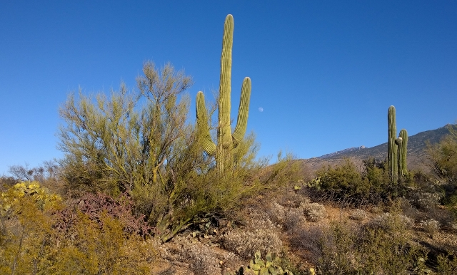 Note moon to right of Saguaro