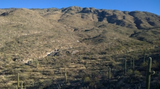 View of Rincon Mountains along Cactus Forest Loop Drive
