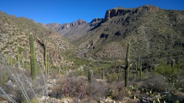 Sabino Canyon from Esperero Trail