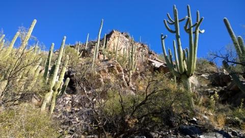 Along Sabino Creek Trail
