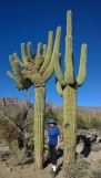 Rare Cristate Saguaro on left with regular on right