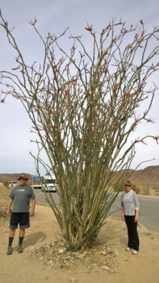 Brian and Sharon with Ocotillo
