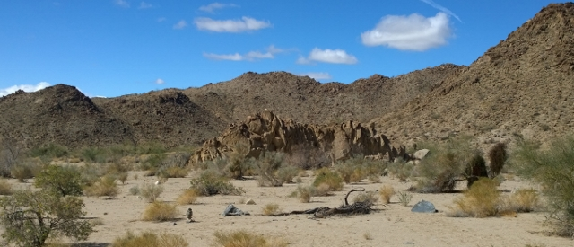 Dyke in the desert