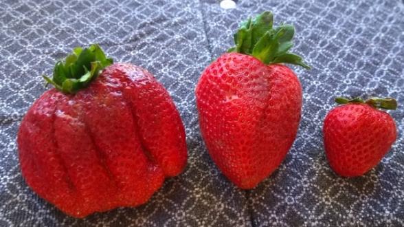 California Mega Strawberries