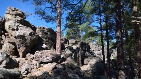 Fool Hollow Lake Trail