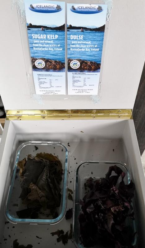 Kelp samples