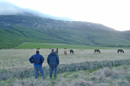 Icelandic Horses near our cottage