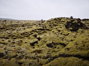 Skaftareldahraun - Green Lava Fields