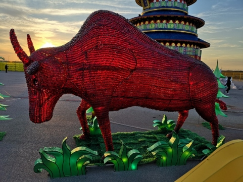 Bull made of pill bottles