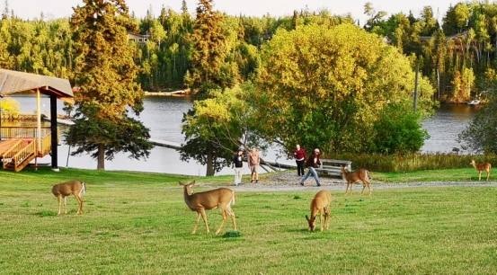 Deer in Kenora